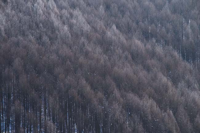 旭川でかかった病は「冬季うつ病」?積雪と日照時間にその精神病は起因しているのか?