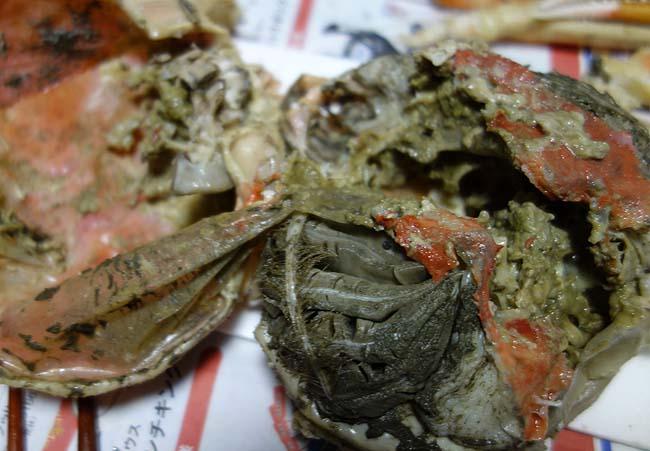 超特大サイズのズワイガニが半額790円!!北海道に来て初めてこの蟹を食べたわ