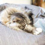 セミリタイア後に習慣になっているのが「寝酒」しかしそれはよく眠れるわけではないという衝撃事実!