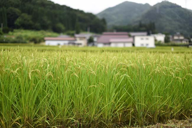衝撃!1ヶ月で15kg以上の米を食うデブ2人…120kgの米を1年持たずに食っちゃうのか?