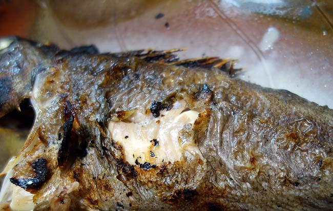 北海道でないと食えない魚「黒ソイ」チヌにも似たその魚を塩焼きと煮付けに