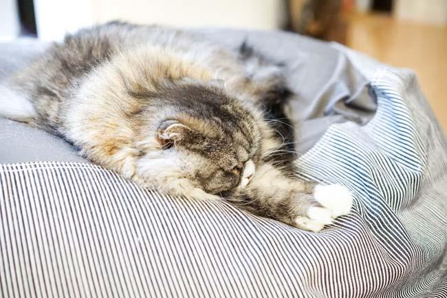 私が最近習慣になっているのが「寝酒」しかしそれはよく眠れるわけではないという衝撃事実!