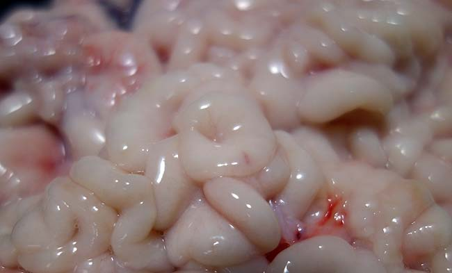 冬も本格化!今年もたちポン(真鱈白子刺身)の美味しい季節!そして真鱈鍋であったまります