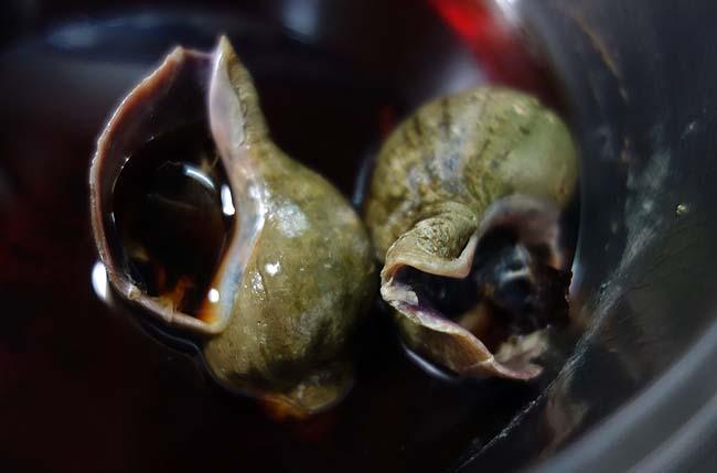 北海道代表格の貝と言えば「つぶ貝」!今回は煮付けにしてみました